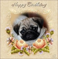 Kennel Troppola Pug Love I Dogs Animal Birthday Greetings Memes