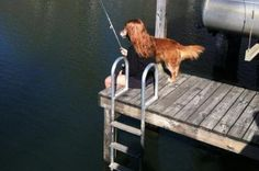 That's not a lady-dog spending her afternoon fishing.