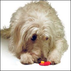 DoggieBuddy.com recommends Clicker Training for your dog. This is a simple yet highly effective method, the average dog owner in mind. You don't need to know much about dog training to use this method.