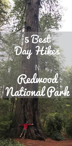 Check out our top 5 day hikes in Redwood National Park! Check out our top 5 day hikes in Redwood National Park! Sequoia National Park, Us National Parks, Yellowstone National Park, Humboldt Redwoods State Park, Humboldt County, California Travel, Northern California, Sunny California, Best Hikes
