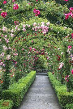cbiiidesigns - Garden Care, Garden Design and Gardening Supplies Garden Care, Formal Gardens, Outdoor Gardens, Amazing Gardens, Beautiful Gardens, Garden Arches, English Country Gardens, Dream Garden, Garden Planning