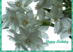 Narcissi Birthday Greeting Greeting Card