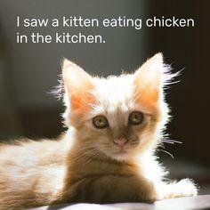 (47) Одноклассники Tongue Twisters, Kitten, Cats, Animals, Cute Kittens, Kitty, Gatos, Animales, Animaux