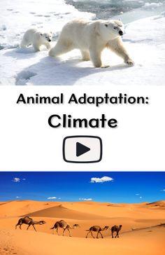 example culture essay zoos