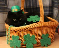 Love, Joy and Peas: Funny St. Patrick's Day Cat Photos