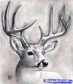 Drawing Techniques how to draw a deer head, buck, dear head step 9 Animal Drawings, Art Drawings, Drawing Animals, Drawing Faces, Hunting Drawings, Deer Sketch, Deer Art, Online Drawing, Realistic Drawings