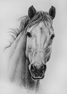 Hello, everyone! First off, I want to say thank you to anyone who left me a birthday message - I love each and every one of you, and you made my day. This drawing was one of those that w. Horse Face Drawing, Horse Drawings, Pencil Drawings, Art Drawings, Stippling Art, Horse Sketch, Pop Art Wallpaper, Animal Sketches, Amazing Drawings