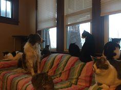 White Border Collie, Animals, Furniture, Home Decor, Animales, Decoration Home, Animaux, Room Decor, Animal
