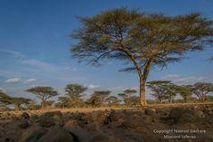 """Shamba la mawe"" Olturot, Marsabit, Northern Kenya."
