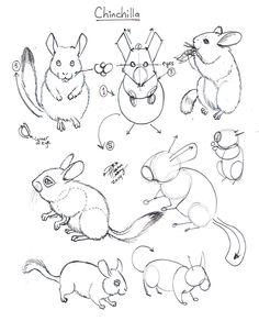 Draw Chinchilla by Diana-Huang.deviantart.com on @DeviantArt