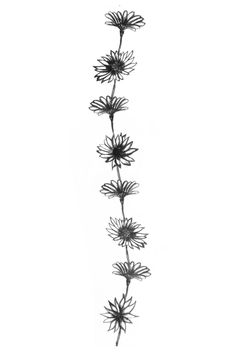 Black Daisy Flowers Tattoo Design