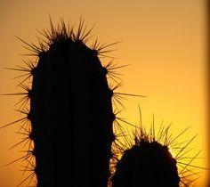 ¿Cómo hacer tierra para macetas para los cactus? | eHow en Español