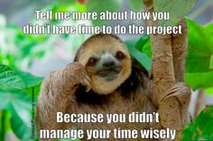 Regardless of whether or not you have any teaching experience, these 14 teacher memes will demonstrate exactly what it feels like to be an educator in today's day and age. If you are a professional teacher, then you'll be laughing all the way to the Class Memes, School Memes, School Quotes, Baby Sloth, Cute Sloth, Funny Sloth, Sloth Memes, Memes Humor, Tattoo
