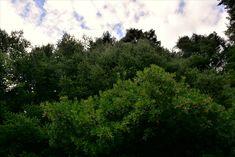 M   o    m    e    n    t    s    b    o    o    k    .    c    o    m: Κεφαλληνιακή ελάτη και κουμαριές από τη χλωρίδα το... River, Nature, Outdoor, Outdoors, Naturaleza, Outdoor Games, Nature Illustration, The Great Outdoors, Off Grid