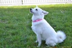 Emmy modeled with her pink light collar LEUCHTIE Mini.