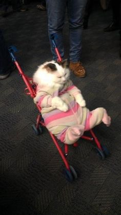 This swaddled cat in a stroller. | The 40 Most WTF Animal Pics Of 2013
