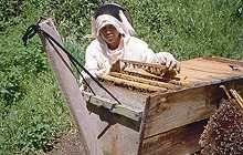 La ruche kényanepar Gilles FertAuteur de « L'élevage des reines » aux Editions…