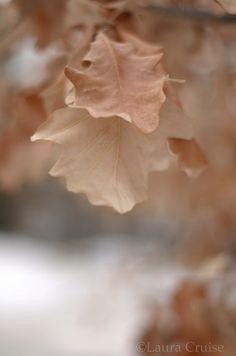 Soft oak leaf surfaces | Flickr - Photo Sharing!
