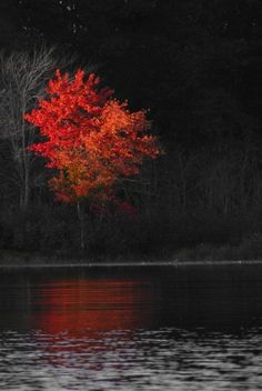 A lonely blaze (by palandir-anann) [touch of color autumn leaves]. Black & White with a Touch of Color Photography ❤ Splash Photography, Color Photography, Black And White Photography, Nature Photography, Travel Photography, Color Splash, Color Pop, Splash Art, Colour