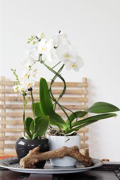 Tag der Orchidee - Styling am Deko-Donnerstag