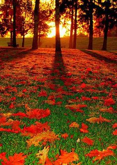 Gorgeous layer of autumn leaves on a green carpet of grass.