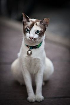 This is a beautiful cat!
