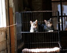 Shelter Me Inc recommends placing barn cats in an acclimation cage in a windowed area where they can see what is going on and bond with their environment. photo: Alyssa Harkness