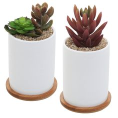 Amazon.com: MyGift 4 Inch Set of 2 Ceramic Succulent Plant Pots w/ Removable Bamboo Saucers, White: Patio, Lawn & Garden