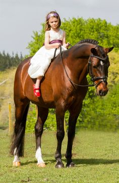 Kyra Rogerson on Davidoff.  Davidoff is a German riding pony stallion standing 14.2 hands high.
