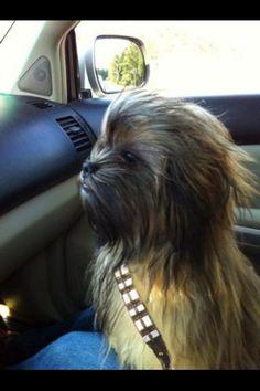 Si quieren, se los dejamos como Chewie... mwwwwarrrgh!