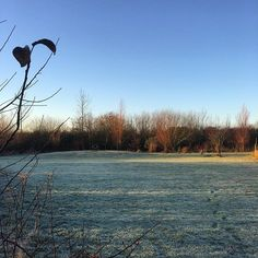 A #chair on a #knoll. The nearest we get to #gardendesign here at #commonfarmflowers. #view #gardens #gardening #somerset #frost #flowerfarm