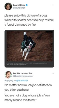 Cute Funny Animals, Funny Cute, Faith In Humanity Restored, Wholesome Memes, Stupid Funny, Funny Stuff, Animal Memes, Make Me Smile, I Laughed