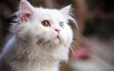 What a Beautiful Cat - credit to: swipurr.com