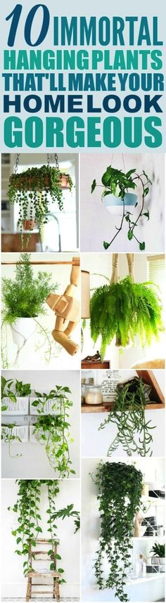These 10 Low Maintenance Hanging Plants are THE BEST! Im so happy I found these AMAZING ideas! Now I have a great way to decorate my home and not kill the plants! - Home And Garden Inside Plants, Cool Plants, Hanging Plants, Indoor Plants, Diy Hanging, Hanging Baskets, Indoor Herbs, Indoor Flowers, Container Gardening