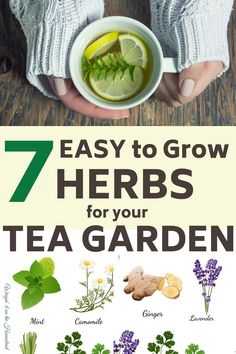 How to Easily Grow Herbs for your Tea Garden! - - Growing herbs for tea is an easy and fun way to add new plants to your garden. Here are 7 easy herbs for your tea garden. Gardening For Beginners, Gardening Tips, Indoor Gardening, Vegetable Gardening, Plants For Garden, Gardening Direct, Herb Plants, Indoor Herbs, Gardening Services