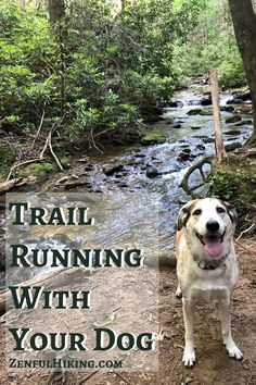 Trail Running with your dog can be a rewarding experience for you and your four legged friend. Here is what you need to know to hit the trails! Hiking Dogs, Go Hiking, Hiking Gear, Trail Running Motivation, Running Gear, Big Dogs, Four Legged, Need To Know, Nova