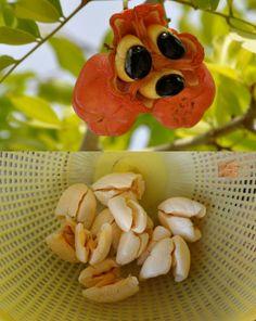 Strange Thing: Fruits are Unusual! Weird Fruit, Funny Fruit, Strange Fruit, Fruit And Veg, Fruits And Veggies, Vegetables, Bizarre Animals, Weird Toys, Bizarre News