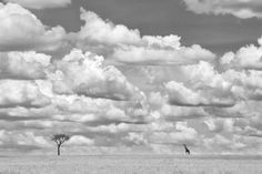 Giraffes 5 by Richard Garvey-Williams - 2014 Sony World Photography Awards - Nature & Wildlife Shortlist
