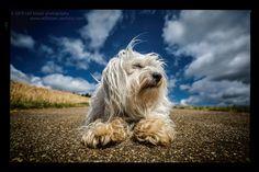 https://flic.kr/p/vC4vyt | Tough dog | Mika liegt ganz cool auf der Straße und wartet bis ich ihm seine Belohnung gebe.