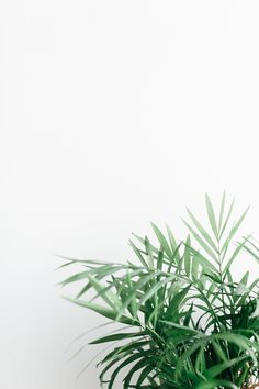 Greenery. Background. Palm leaves. Leaves. Lightroom preset. Greenery Background, Plant Background, Cute Backgrounds, Wallpaper Backgrounds, Aesthetic Iphone Wallpaper, Aesthetic Wallpapers, Whatsapp Wallpaper, Plant Wallpaper, Plant Aesthetic