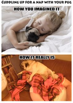 Ugh every single night with the dogs. I never have room. But I wouldn't have it any other way :)