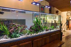 Creative Wall Auarium designs For Home Decoration and Amazing Room Separator Part 7 Aquarium Aquascape, Nature Aquarium, Aquarium Fish Tank, Planted Aquarium, Aquascaping, Aquarium Landscape, Terrariums, What Is Landscape Architecture, Fish Tank Themes