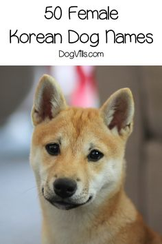 Whether you're looking for Korean dog names because you love the culture or want to honor your heritage, we've got you covered! Shiba Inu, Japanese Dog Breeds, Japanese Dogs, Puppy Names, Pet Names, Best Dog Toys, Best Dogs, Food Dog, Dog Grooming Clippers