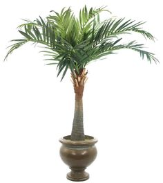 Natural Decorations, Inc. - Royal Palm, Shown in Container H, Pedestal Urn Bronze