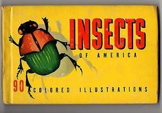 Insects Of America Book Rare 1937 Color illustrations Hardcover Miniature Bugs SOLD