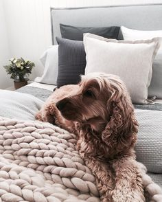 """1,162 Likes, 48 Comments - T H E S T A B L E S (@the_stables_) on Instagram: """"Any opportunity to hop onto a bed so they can snuggle in all the cushions and our dogs are onto it.…"""""""