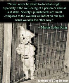 #wordstoliveby #rescue #martinlutherking