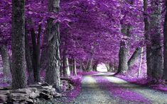 Most Beautiful Images Of Nature | Wallpapers Purple The Most Beautiful Nature Of World Forest 1600x1000 ...