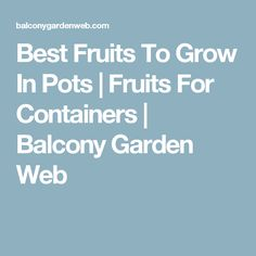 Best Fruits To Grow In Pots | Fruits For Containers | Balcony Garden Web