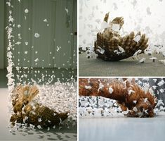 Floating Animal Sculptures from Claire Morgan – DesignSwan.com